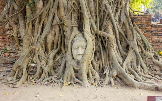 Temples à voir à Ayutthaya : mes coups de coeur