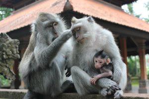 Monkey-Forest-Ubud-Ciaotutti