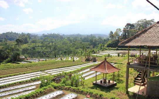 Lieux à visiter à Bali : les bons spots pour votre voyage a Bali